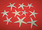Small (2 - 5cm) Natural Starfish - Craft Work, Embellishments, Displays etc.