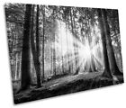 Sunset Forest Summer B&W Print CANVAS WALL ART Picture Framed