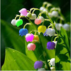100 pcs Lily of the Valley Flower Seeds, Bell Orchid Seeds Bonsai Balcony Flower