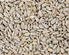 Premium Sunflower Hearts Bakery Grade Kernels Wild Bird Food 25kg Bulk Sack