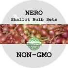 2018 SHALLOT BULB SETS - Ambition - Fall Garden Plant Seed, Multiplier Onions