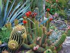 Desert Cactus Flower Scene -  Art Picture Poster Photo Print 20TRE
