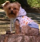 Dog Girl Boy Clothes Blue Hoodie Shirt Choice of 3 Sizes XXS XS S ROCK'N'POOCHES