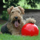 Boomer Red Ball Indestructible Solid Dog Toy Various Pet Nice puppy Toys Si E5V6