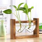 Glass and Wood Vase Hydroponic Planter/Terrarium for Cuttings