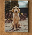 Pet Photograph on Canvas-Portrait ( Gallery Standard Wooden Frame)-Hang on Wall