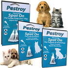 BOB MARTIN PESTROY SPOT ON FLEA TICK PROTECTOR TREATMENT CATS DOGS PUPPY KITTEN