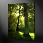 FOREST HIGHEST QUALITY CANVAS PRINT PICTURE READY TO HANG