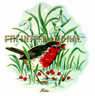B108 ~ English Red Robin on Ceramic Decals, 2 sizes to choose from berries grass image