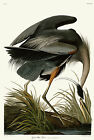 No 211 Great Blue Heron John James Audubon Double Elephant Fine Art Print Giclee