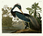 No. 217 Louisiana Heron John James Audubon Double Elephant Fine Art Print Giclee
