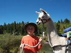 5 ACRES COLORADO LAND LLAMA TREK SAN LUIS VALLEY NO INTEREST