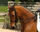 Rhinegold German Leather Rolled Double Bridle With Reins Elegantly Designed