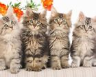 TABBY CATS KITTENS POSTER PHOTO PRINT