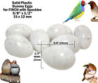 "FINCH DUMMY EGGS - STOP LAYING! Fake Plastic Bird Eggs 5 8"" x 1 2"" (15 X 12 mm)"