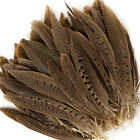 English Ringneck PHEASANT Tail Natural Feathers 10-100 Pcs MANY SIZES! Halloween