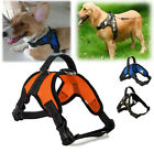Pet Vest Collar Small Large Middle Size Dog Adjustable Harness Walk Out Strap