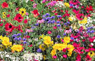 Serendipity's Native North American Garden Wildflower Mix seeds Lots of Color!