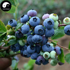 Buy Blueberry Fruit Tree Seeds Plant Anthocyanin Berries For Bilberry