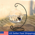 Hanging Glass Ball Mini Fish Tank Aquarium Plant Home Desktop Decor with Stand