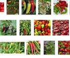 Seeds Chile hot spicy guaranteed varieties very rare Capsicum