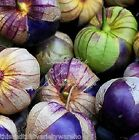 Physalis Purple Tomatillo Seeds Compact Vines Fruit bursting with Flavor - Salsa