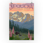 Sequoia Park, CA - Spring Flowers - LP Artwork (Posters, Wood & Metal Signs)
