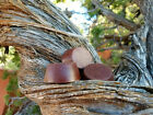 Small Orgonite® Tower Busters - Red Rock Sedona Vortex Pucks - EMF 5G Protection
