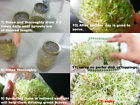 USDA Organic ALFALFA Sprouting Seed with Micro Green Lid for Mason Jar 1g-1/2lb