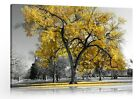 Large Tree Yellow TOP Modern Canvas Wall Art Living Room Painting Home Decor