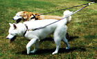 "Auburn Leathercrafters QUALITY ""2 Dog Walker"" Leather or Web Dog Leads Couplers"
