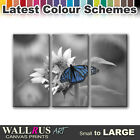Butterfly ANIMALS  Canvas Print Framed Photo Picture Wall Artwork WA