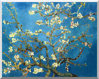 Stretched Giclee Art Print Almond Tree Blossom in Bloom Vincent van Gogh Repro