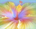 Poster / Leinwandbild Illustration of Hibiscus flower - Shannon Posedenti