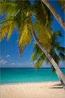Poster / Leinwandbild Palm trees and turquoise water along Sev... - B. Jannsen