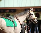 TAP TO IT   - top juvenile Filly of 2015