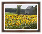 Sunflower Farm New England Photo to Canvas Framed Wall Art Print Painting Repro