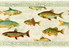 Trout Sport Fish Rustic Green Cabin Man Cave Lodge Fishing Wallpaper Wall Border