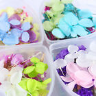 1 Box Mixed Dried Flowers Nail Art DIY Glass Bottle Decoration Preserved Flower