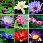 10PCS Fashion Bonsai Lotus Water Lily Flower Bowl Pond Fresh Seeds Perfume Lotus