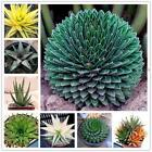Aloe Vera Seeds Rare Herb Seeds Cosmetic Bonsai Succulent Plants Seeds JTOO