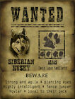 DOG WANTED POSTER FUNNY SIBERIAN HUSKY FUNNY CUTE  :3 SIZES TO CHOOSE FROM