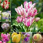 New Nice Adorable Flower Fragrant Seeds Fragrant Blooms Tulip Seeds EH7E 01