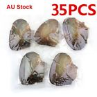 Au 35pcs Individually Wrapped Oysters Large With Pearl Birthday Wish Gifts New