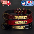 Soft Padded Leather Dog Collar Strap  Custom Brass Name Plate Id Tag