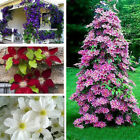 100Pcs/bag Healthy Clematis Flowers Seeds Climbing Plants Garden Hot Planting