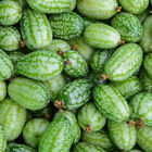 KM_ 100Seeds Mini Watermelon Cucamelon Seed Fruit Plant Home Garden Yard Decor P