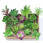 Artificial Succulents Plants Fake Flower Bonsai Home Office Decor Wood Flowerpot