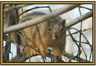 Squirrel  Photographs  - New -  Fridge magnets