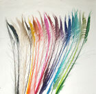 "10 Peacock Sword Feathers 30-38"" Length Bleached & dyed 21 Colors Available"